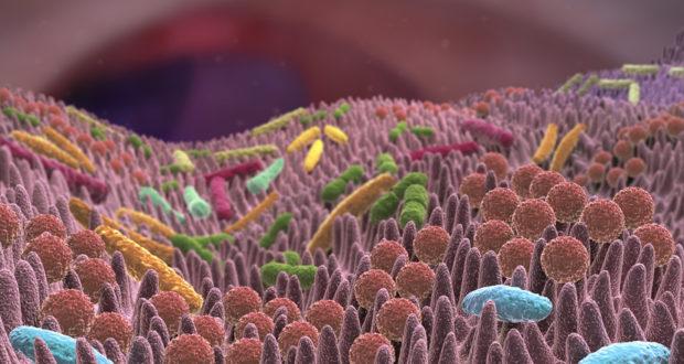 Probiotische Darmbakterien Helferlei mit großer Wirkung