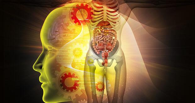 Mikrobiom und Gehirn