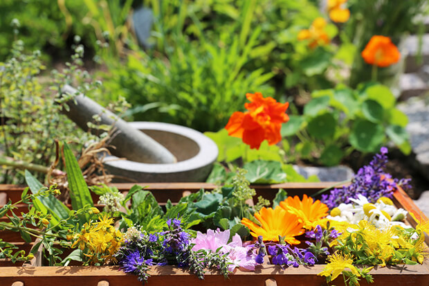 Heilbringende Pflanzen bei Reizdarm